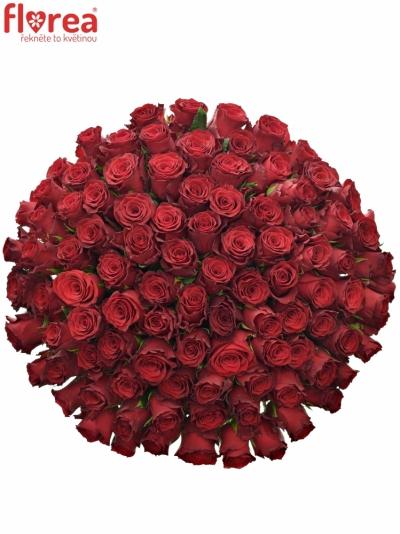 Kytice 100 rudých růží RHODOS 60cm