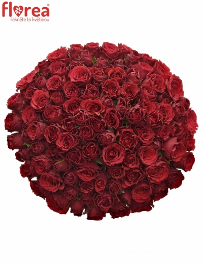 Kytice 100 rudých růží UPPER CLASS 50cm