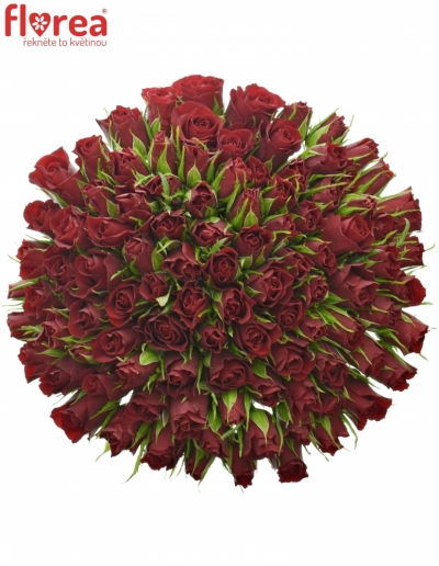 Kytice 100 červených růží VALENTINO 40cm