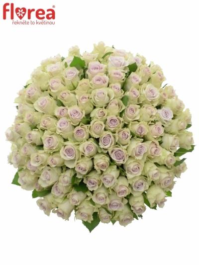 Kytice 100 růží AIRLA 50cm