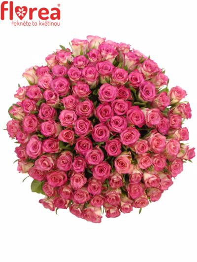 Kytice 100 růží ENSEMBLE 60cm