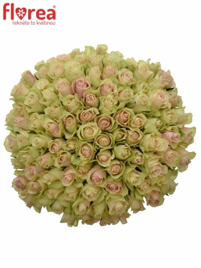 Kytice 100 růží LA BELLE 50cm