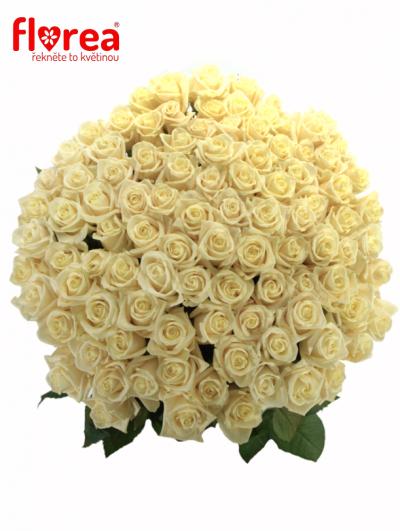 Kytice 100 růží MEDEO