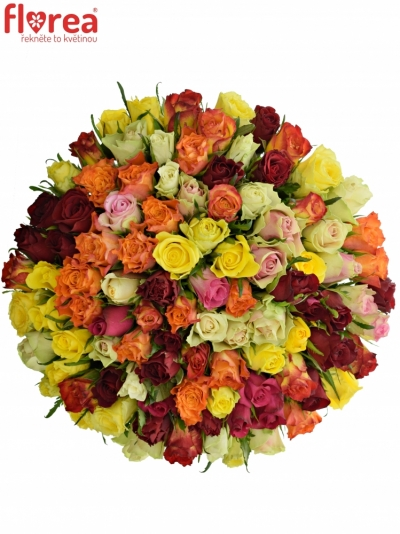 Kytice 100 růží MIX 60cm