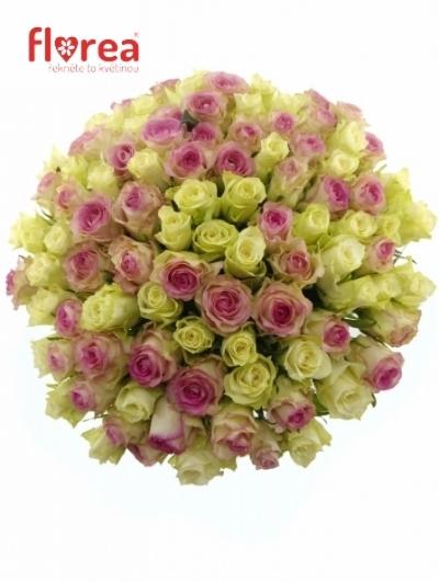 Kytice 100 růží PINK ICE + ATHENA