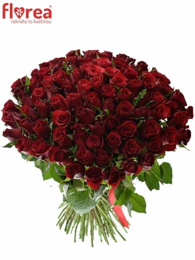 KYtice 100 růží PRESTIGE 60cm