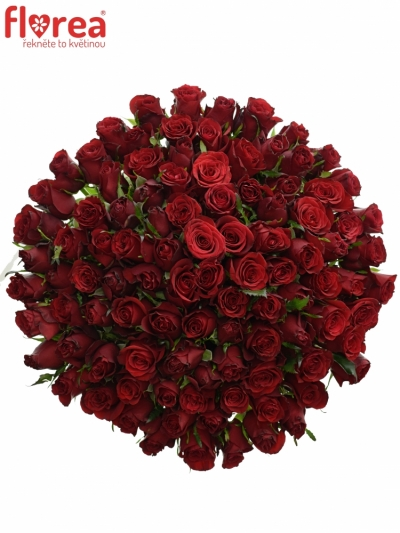 Kytice 100 růží PRESTIGE 70cm