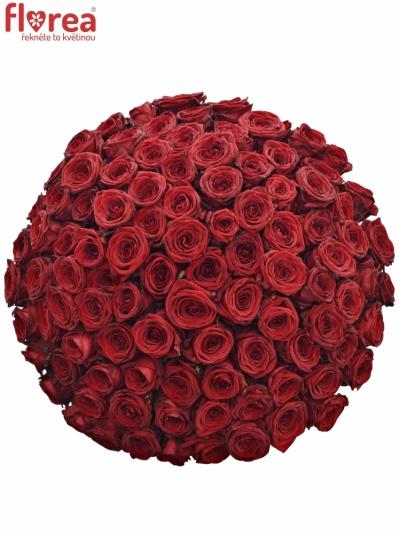 Kytice 100 rudých růží RED NAOMI! 50cm