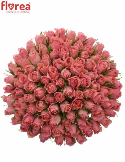 Kytice 100 růžových růží ACE PINK 60cm