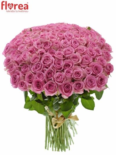 Kytice 100 růžových růží AQUA 40cm