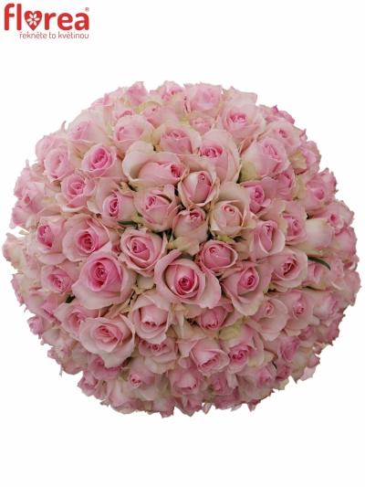 Kytice 100 růžových růží AVALANCHE SORBET+ 50cm
