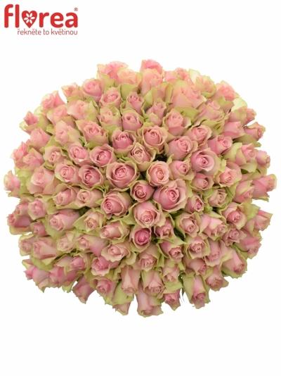 Kytice 100 růžových růží BELLE ROSE 60cm