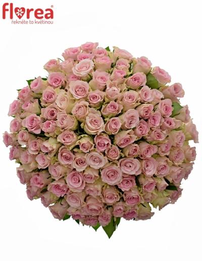 Kytice 100 růžových růží BISOU 40cm