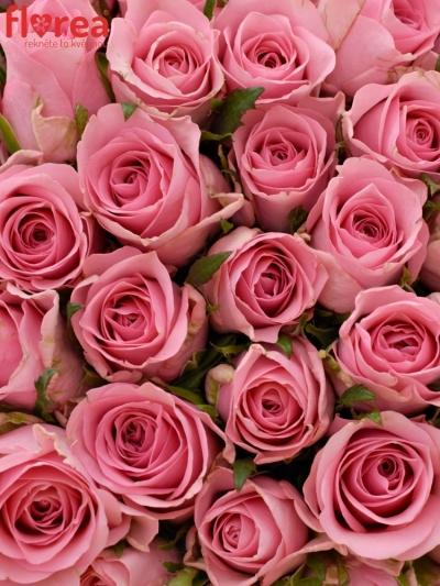 Kytice 100 růžových růží ELIZA
