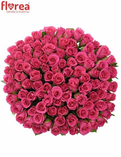 Kytice 100 růžových růží FRISBEE 60cm