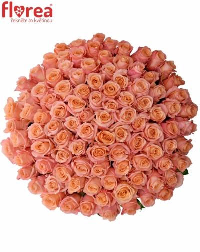 Kytice 100 růžových růží LADY MARGARET 70cm