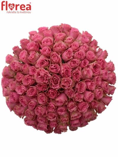 Kytice 100 růžových růží LOVELY RHODOS 70cm