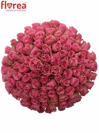 Kytice 100 růžových růží LOVELY RHODOS 50cm
