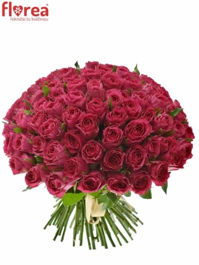 Kytice 100 růžových růží MADAM CERISE