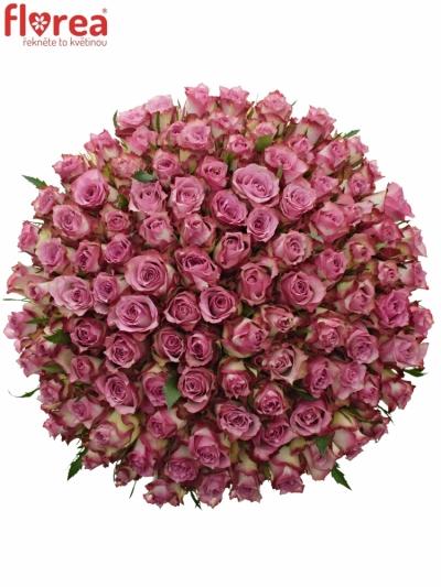 Kytice 100 růžových růží MELINA 50cm