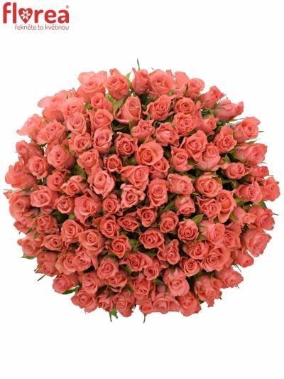 Kytice 100 růžových růží NANCY 50cm