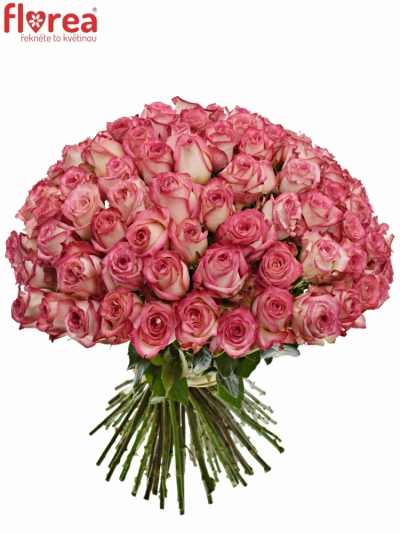Kytice 100 růžových růží NAVARRA 60cm