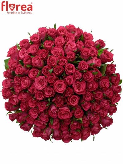 Kytice 100 vínových růží ORCHESTRA 60cm