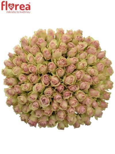 Kytice 100 růžových růží PINK ATHENA 50cm