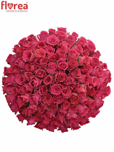 Kytice 100 růžových růží Pink Rhodos 40cm