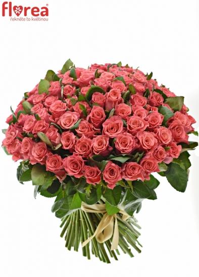 Kytice 100 růžových růží PINK TACAZZI+ 50cm