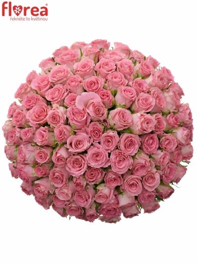 Kytice 100 růžových růží SEDUCTIVE 50cm