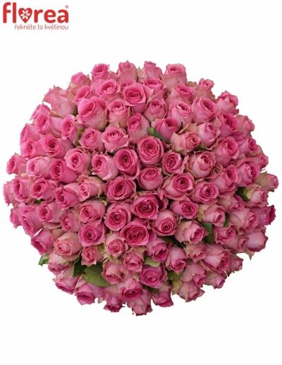 Kytice 100 růžových růží SHANGHAI LADY 50cm
