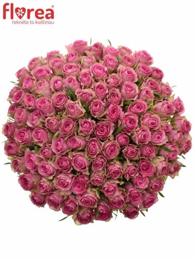 Kytice 100 růžových růží SHIARY 50cm