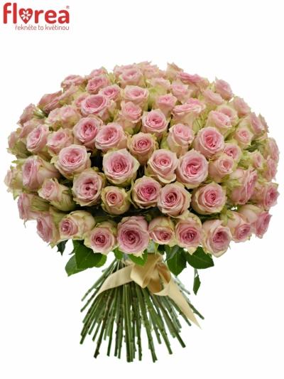 Kytice 100 růžových růží SUDOKU 50 cm