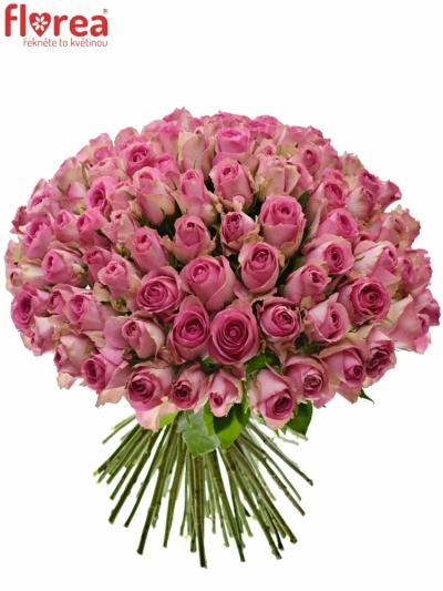 Kytice 100 růžových růží SUPREME+ 50cm