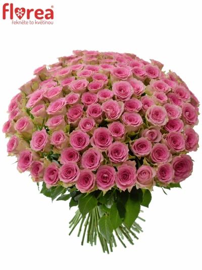 Kytice 100 růžových růží TIMES SQUARE 50cm