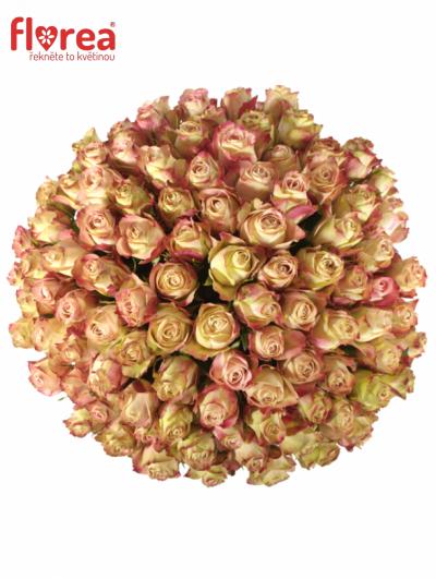 Kytice 100 růžových růží UPPER SECRET 60cm