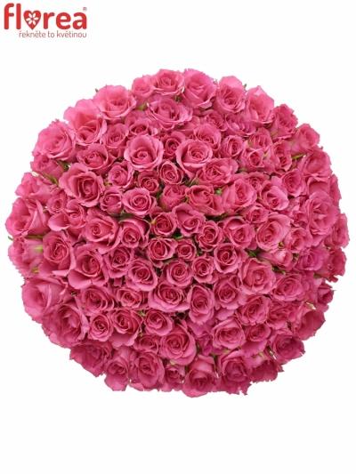 Kytice 100 růžových růží WILD CALYPSO 50cm