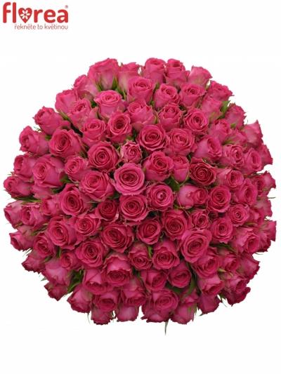 Kytice 100 růžových růží WINK 60 cm