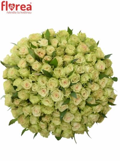 Kytice 100 zelených růží GREEN FASHION 50cm