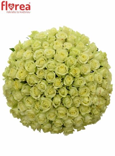Kytice 100 zelených růží GREENWAY 50cm