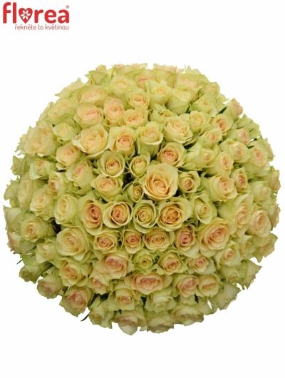 Kytice 100 zelených růží KIWI@ 40cm