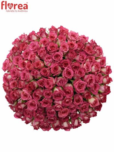 Kytice 100 žíhaných růží CLARION 50cm