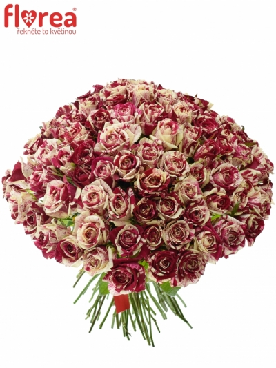 Kytice 100 žíhaných růží HARLEQUIN 40cm