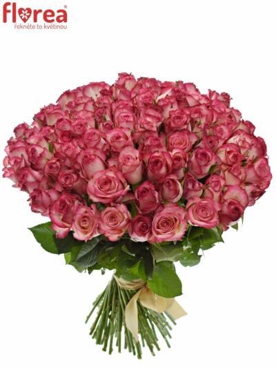 Kytice 100 žíhaných růží MYSTELLE 70cm