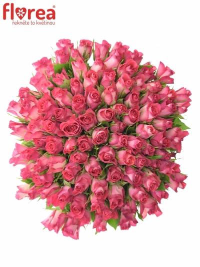Kytice 100 žíhaných růží NICOLETTA 40cm