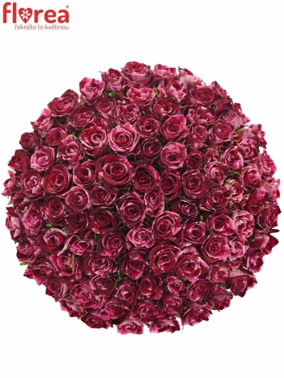 Kytice 100 žíhaných růží RED STORM