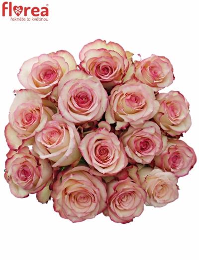 Kytice 15 bÍlorůžových růží TORMENTA