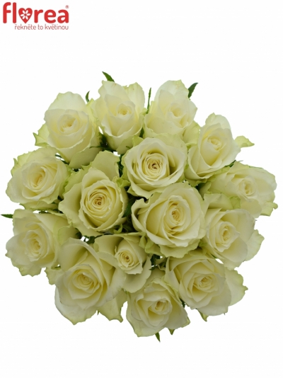 Kytice 15 bílých růží ATHENA 40cm