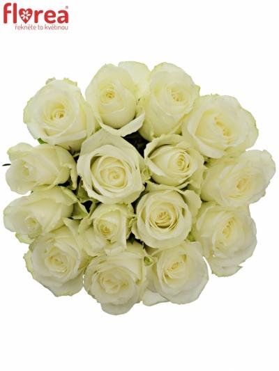 Kytice 15 bílých růží COUNTDOWN 60cm